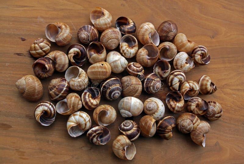 Spiral sea shells royalty free stock photography