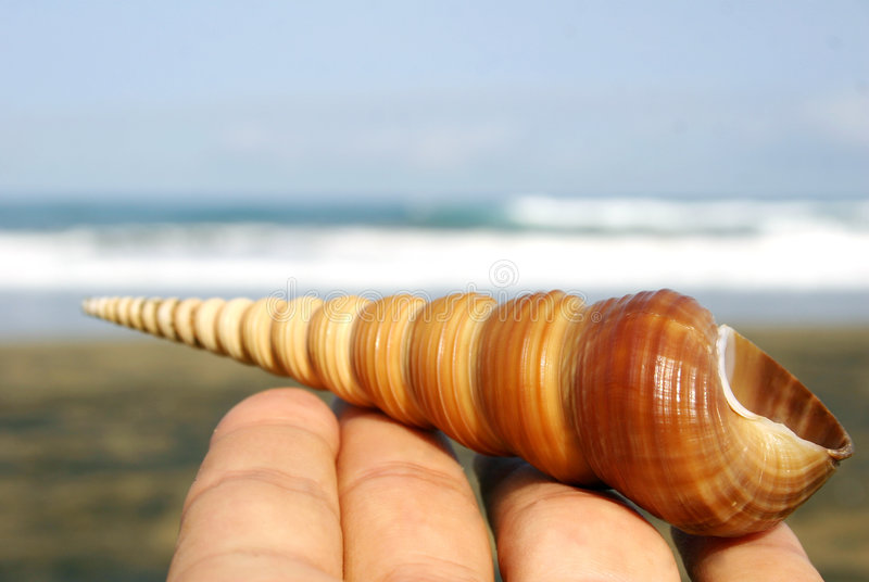 Download Spiral Seashell stock image. Image of curious, meditation - 278575