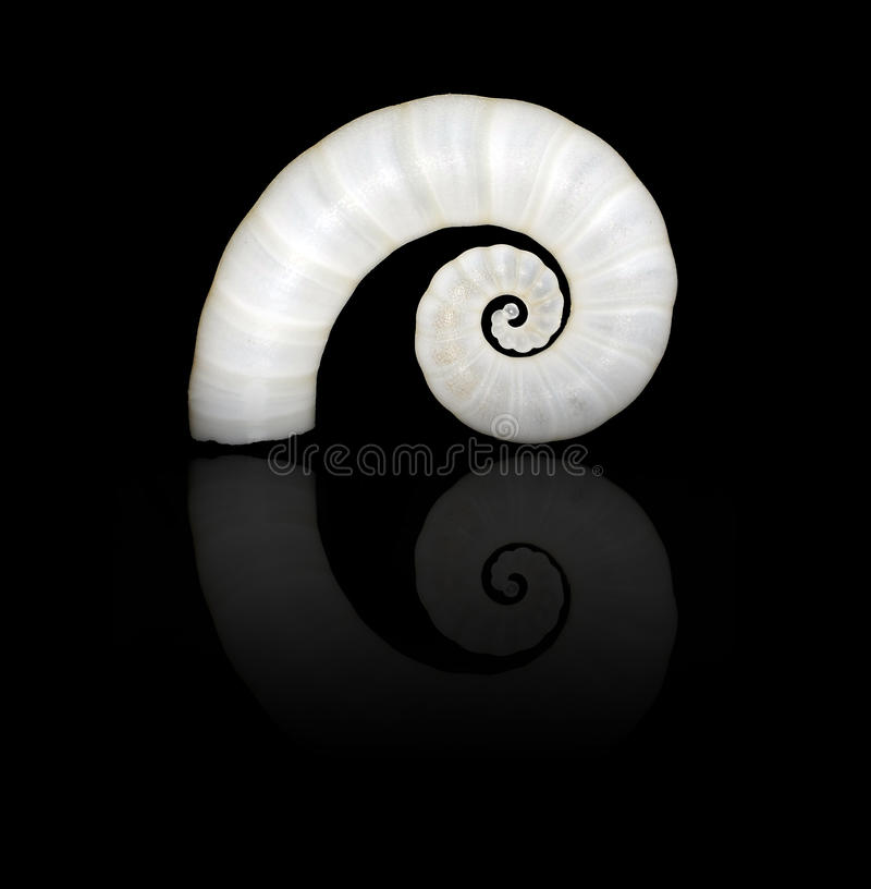 Spiral Shell stock images