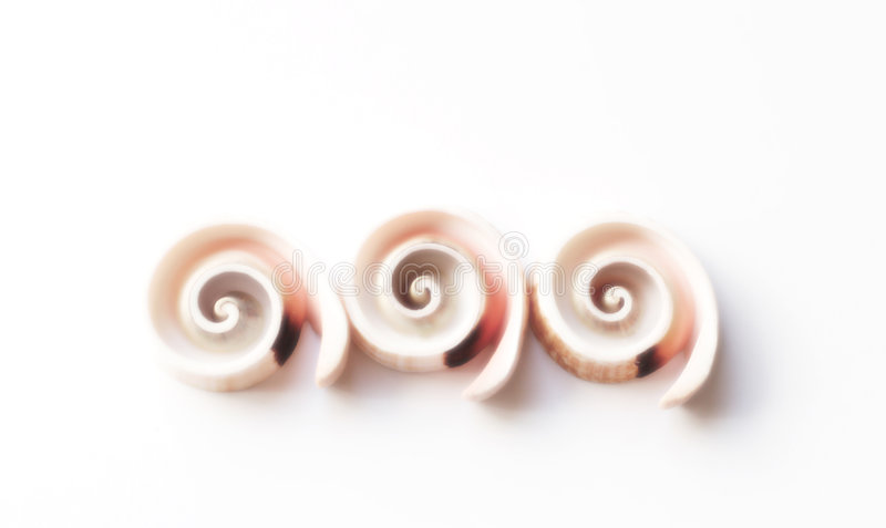 Spiral shells. Three spiral shells. Soft focus royalty free stock photo