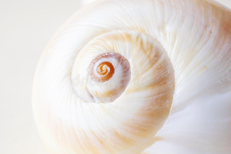 Spiral snail shell closeup on a light pastel background. Detailed macro photography. Large depth of field. The concept of vacation, sea, summer, travel, decor stock image
