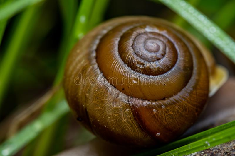 Spiral of snail shell. Close up royalty free stock image