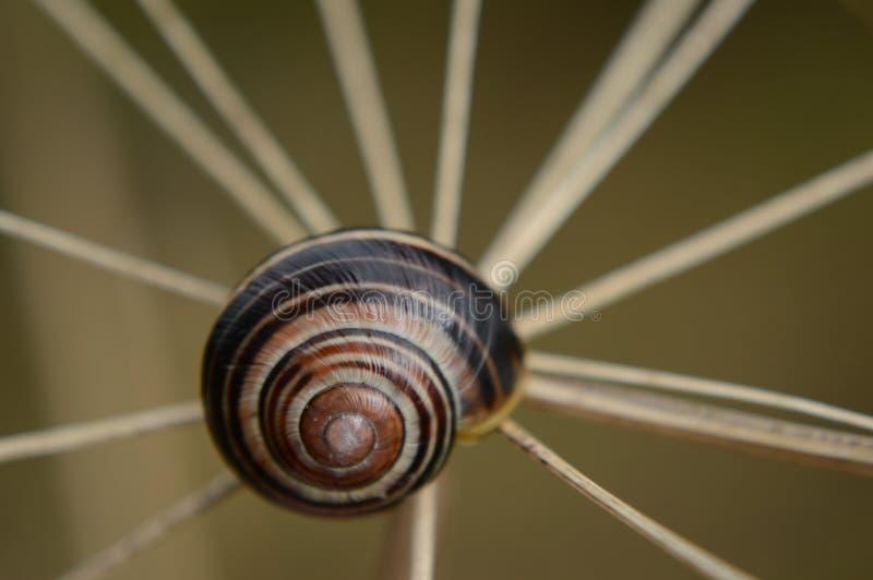 Spiral Snail Trail Free Public Domain Cc0 Image