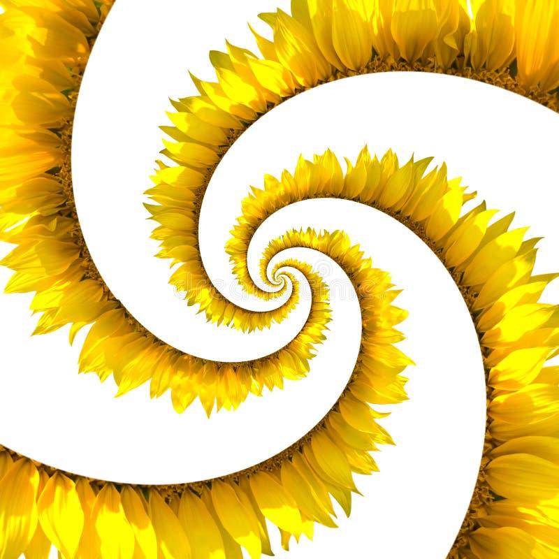 spiral solros stock illustrationer