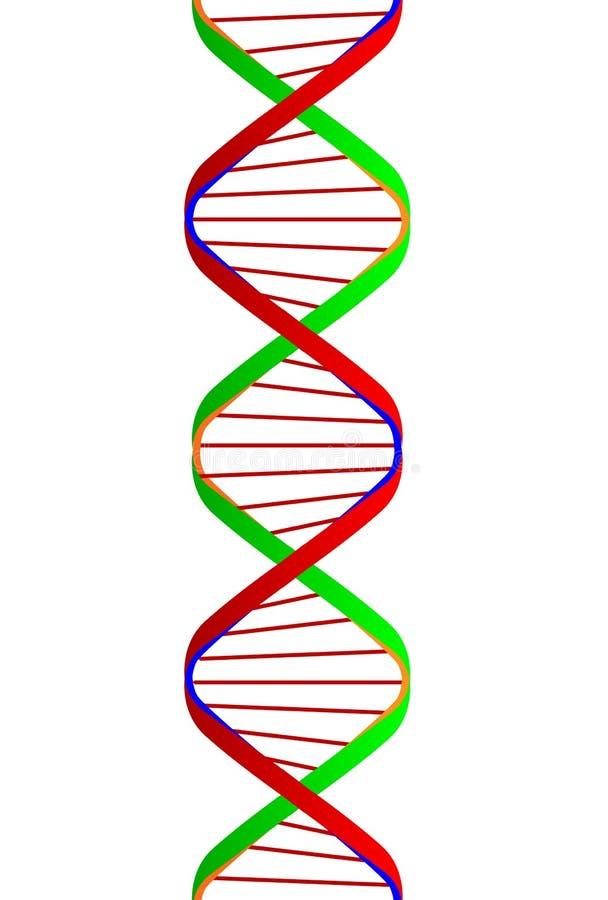 Spirale de jumeau d'ADN au-dessus d'un fond blanc illustration libre de droits