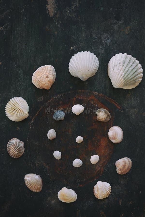 Spirale - Muschelmuster auf alter hölzerner Planke lizenzfreies stockfoto