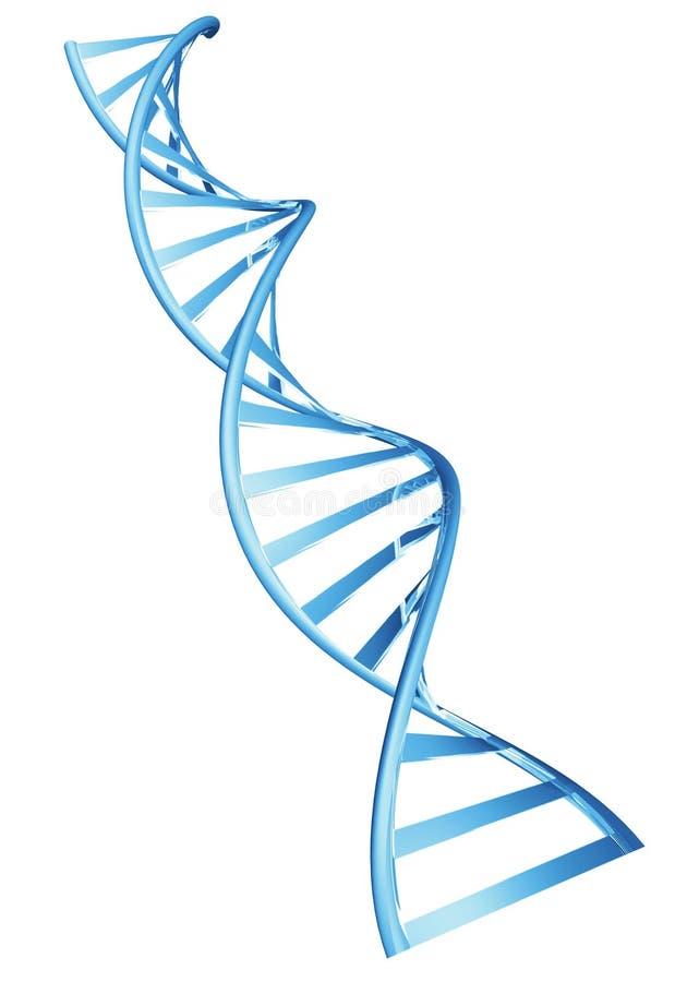 Spiralenstruktur des Doppelhelixes 3D einer menschlichen DNA-Schnur vektor abbildung