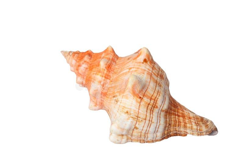 Spiralt havsskal som isoleras på vitt med urklippbanan royaltyfri foto