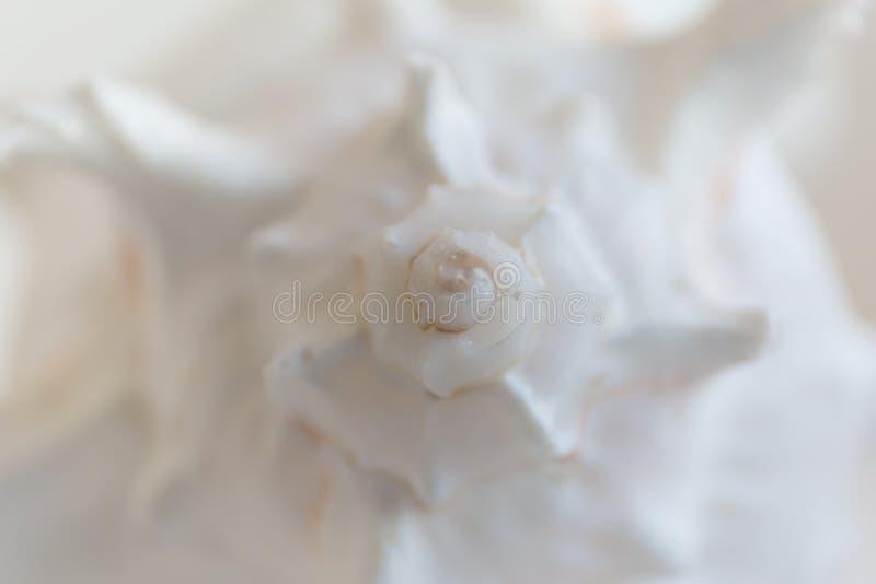 Spiralt makrosnäckskal Gör suddig slutet upp skalbakgrund royaltyfri bild