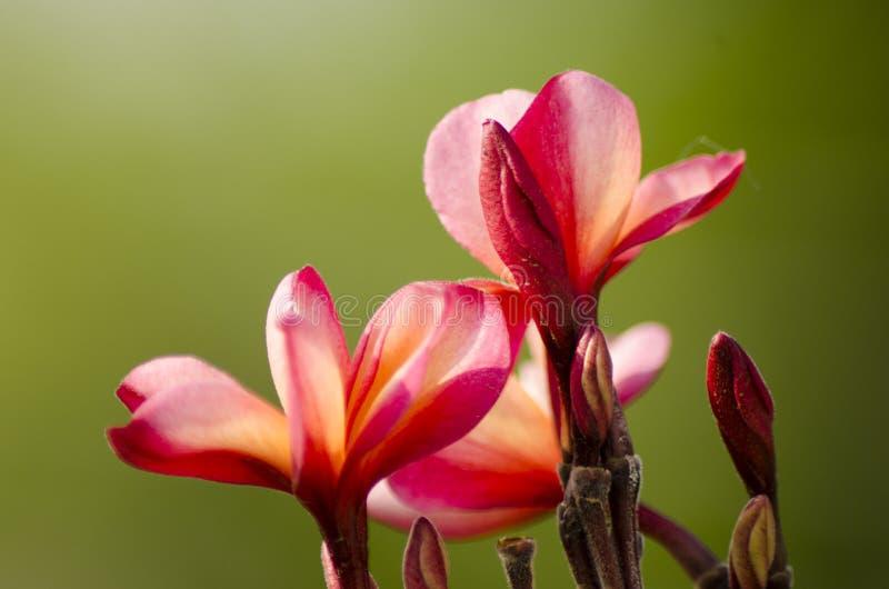 Spirande blomma royaltyfri foto