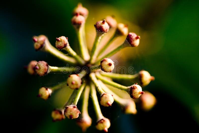 spirande mång- växt arkivbild
