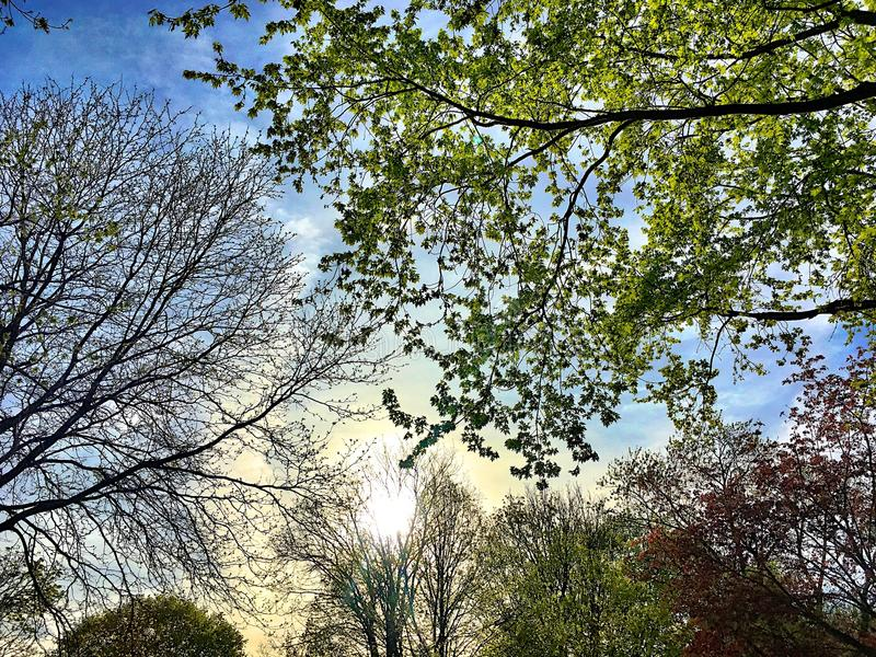Spirande träd under solnedgång på en vårdag royaltyfri fotografi