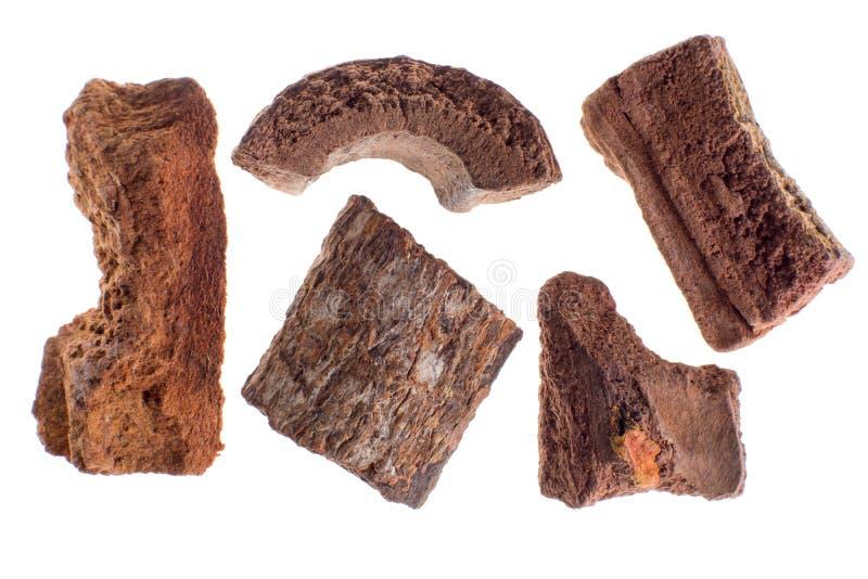 Spirax también llamado de Zarzaparilla, raíz secada fotografía de archivo libre de regalías