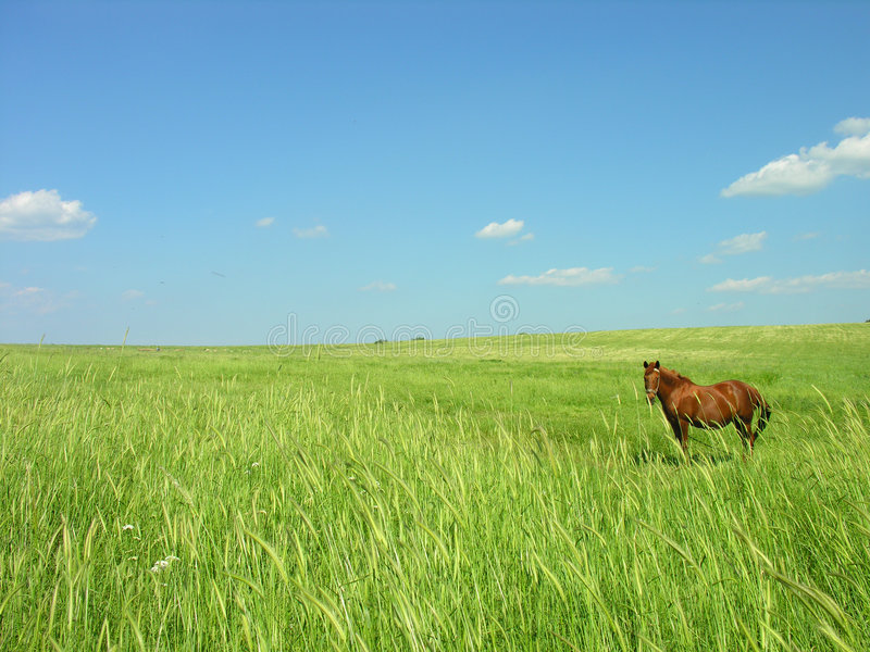 Download Spirit of Freedom stock photo. Image of land, green, brown - 850294