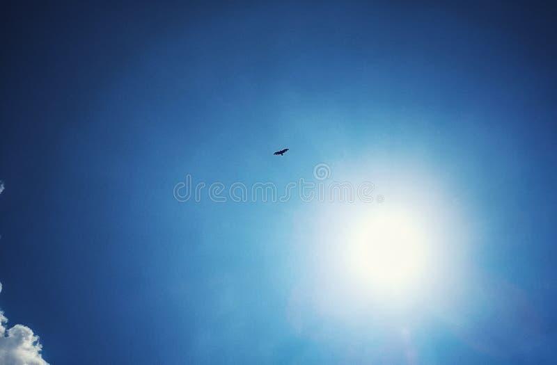 Spirit hawk soaring high. royalty free stock images