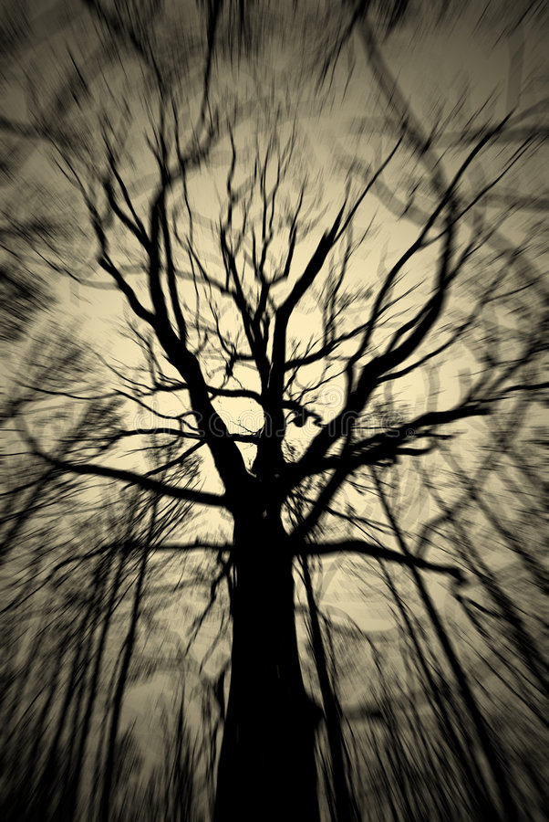 Spirit of a tree royalty free stock photo