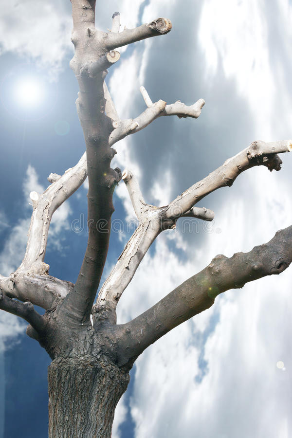 Download Spiritual Tree stock image. Image of outside, cloud, branch - 24292355