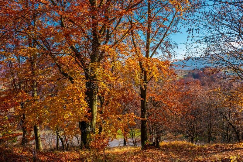 Spiritueux d'automne dans les bois photo stock