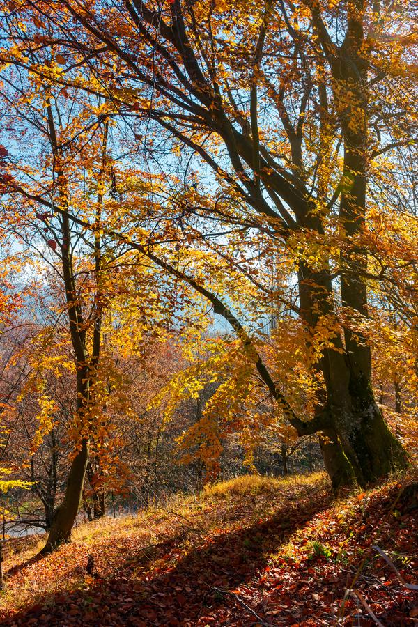 Spiritueux d'automne dans les bois images libres de droits
