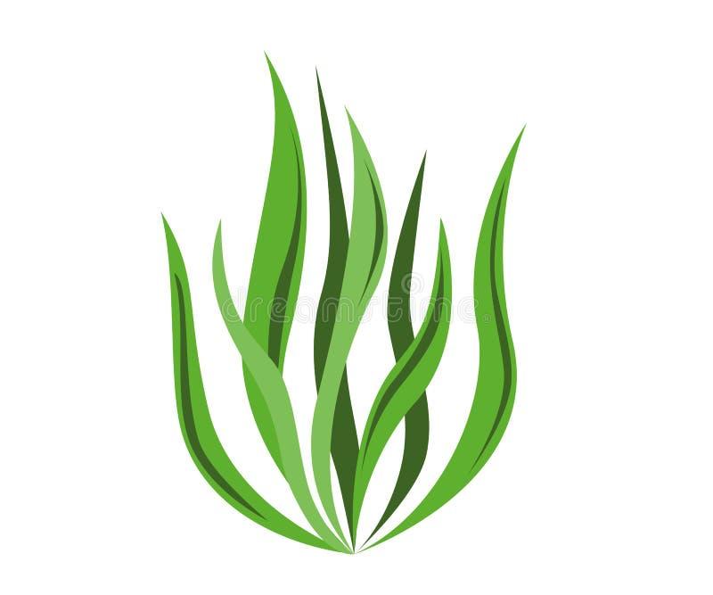 Spirulina algae icon on white background. Vector Illustration. vector illustration