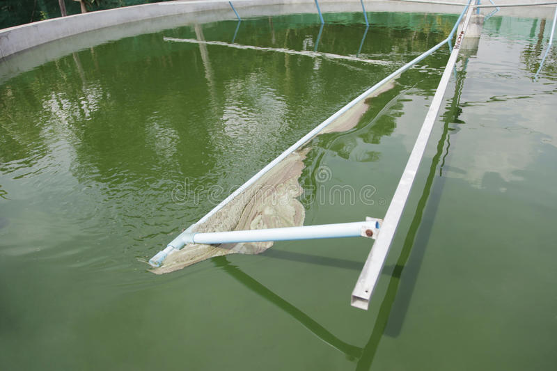 Spirulina het oogsten stock foto's