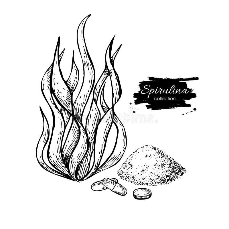 Spirulina seaweed powder hand drawn . Isolated Spirulina a. Lgae, powder and pills drawing on white background. Superfood engraved style illustration. Organic royalty free illustration