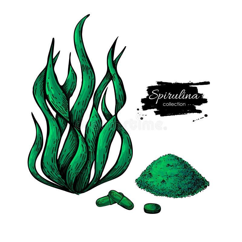 Spirulina seaweed powder hand drawn vector illustration. Isolated Spirulina algae, powder and pills. On white background. Superfood artistic style drawing stock illustration