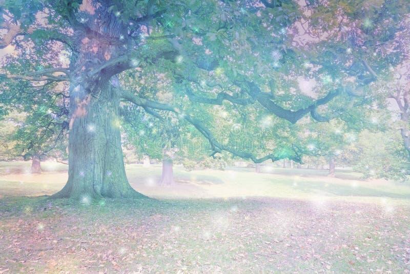 Spirytusowi okręgi przyciągający Antyczny Dębowy drzewo zdjęcie royalty free