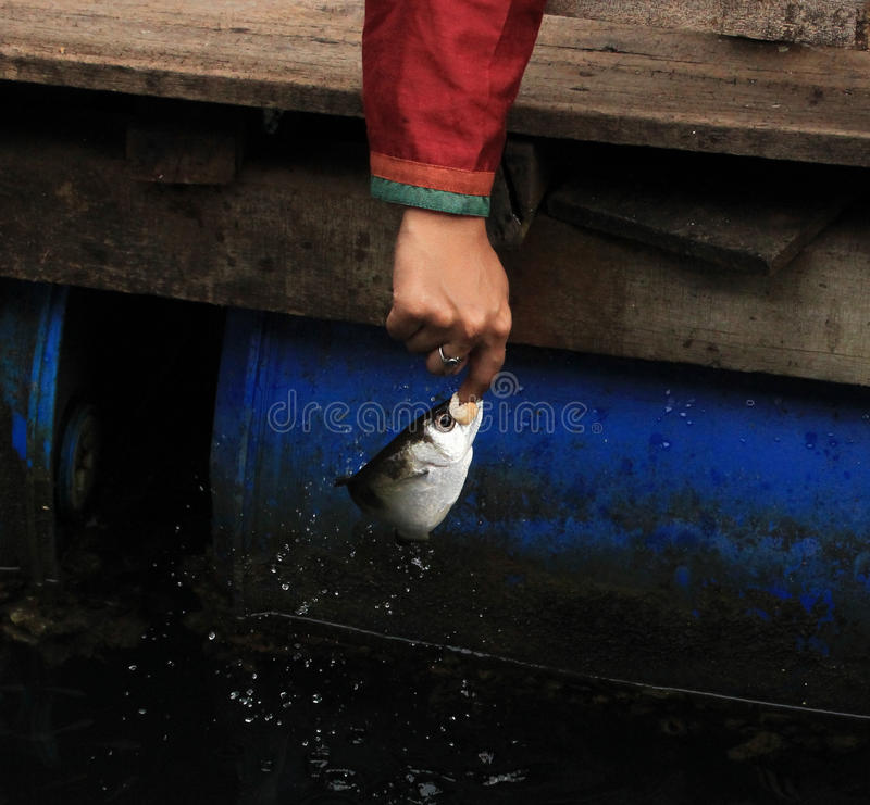 Spit fish stock photos