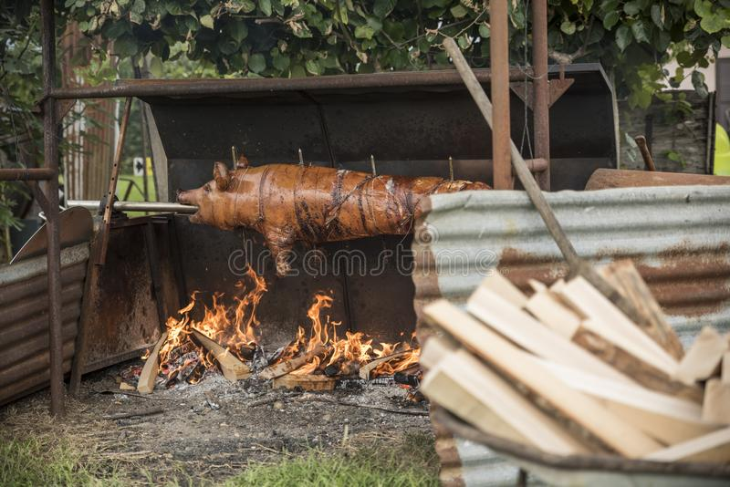 Spit roast sucking pig, open air royalty free stock photos