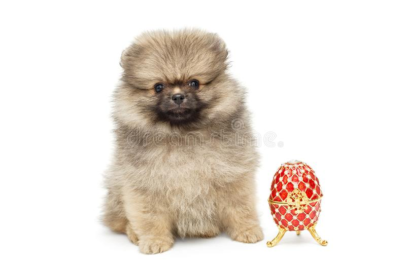 Spitz puppy and decorative egg royalty free stock image