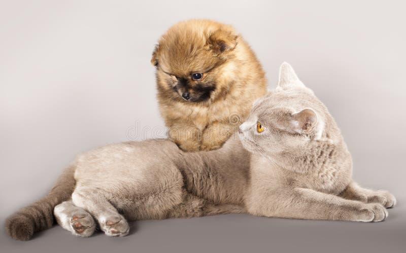 Spitz van de kat en van het puppy stock afbeeldingen