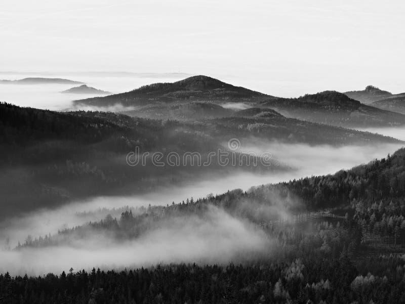 Spitzen von Hügeln und von Bäumen haften heraus von den gelben und orange Wellen des Nebels. Erste Sonnenstrahlen. Schwarzweiss-Fo stockfotografie