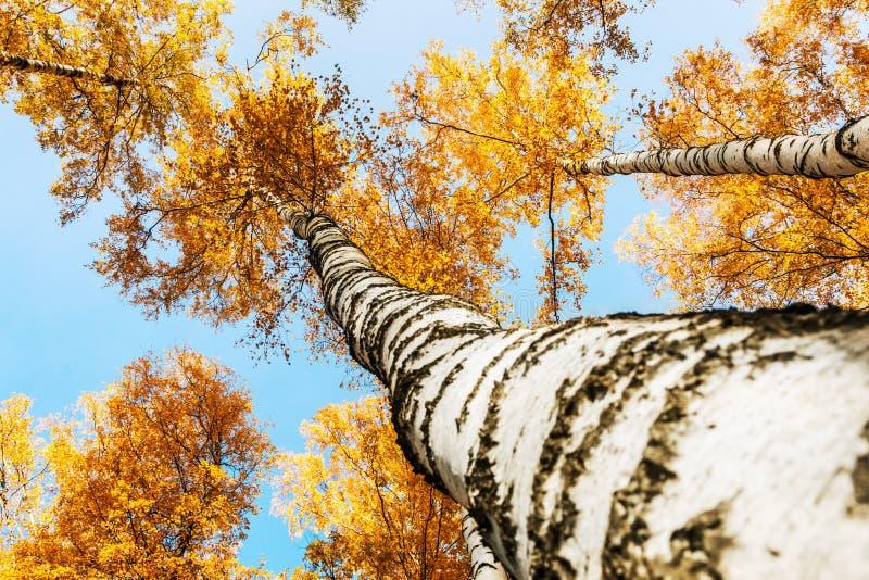 Spitzen von Suppengrün im Herbstlaub lizenzfreie stockbilder