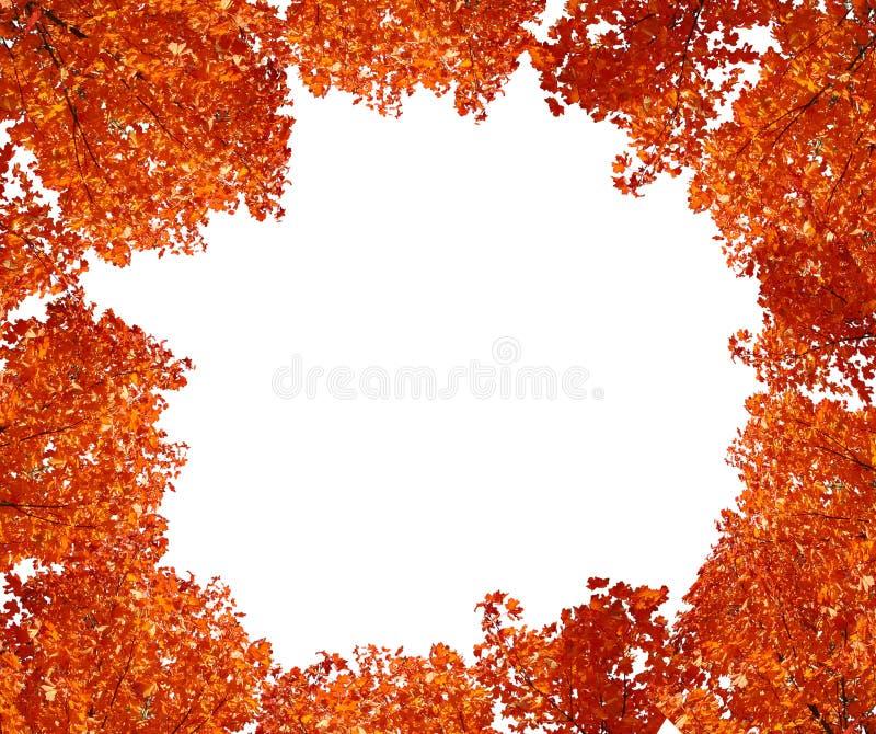Spitzenbaum im Herbst. lizenzfreie stockfotos