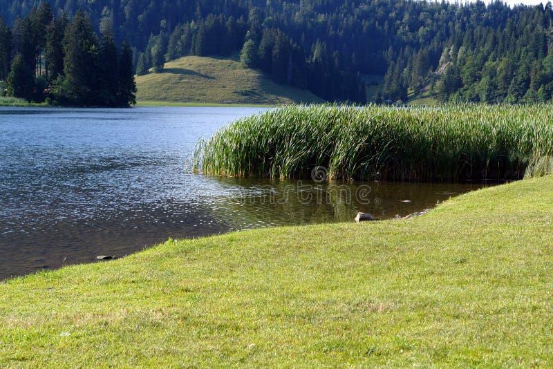 Spitzingsee (lago em Alpes) fotos de stock royalty free