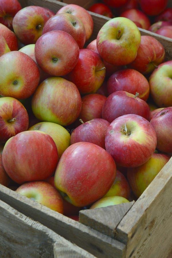 Spjällåda av äpplen arkivfoto