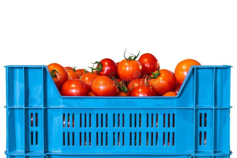 Spjällåda med nya tomater som isoleras på vit arkivbild