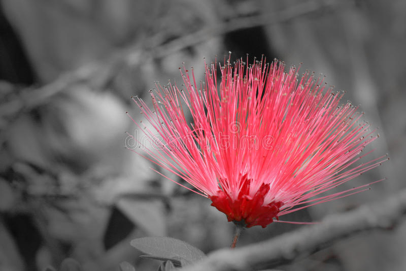 A splash of Flower royalty free stock image