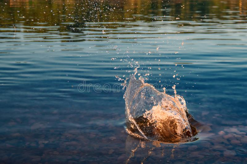 Splash water from stone fallen into river. Warm evening lighting setting summer sun. royalty free stock images