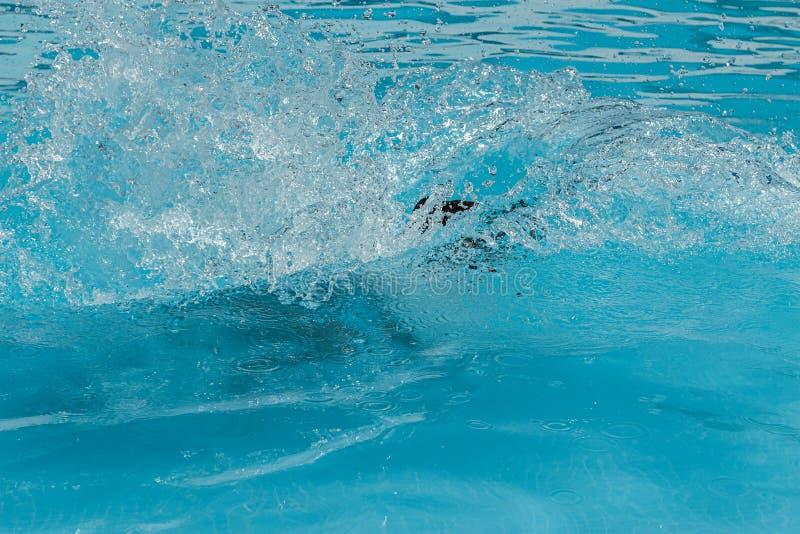 splashing in a swimming pool royalty free stock images