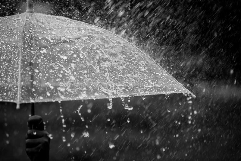 Splashing water on umbrella in the rain. In black and white color tone royalty free stock photography
