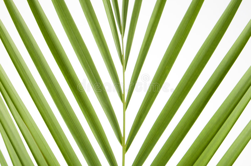 Download Splayed palm leaves stock image. Image of green, background - 6204899