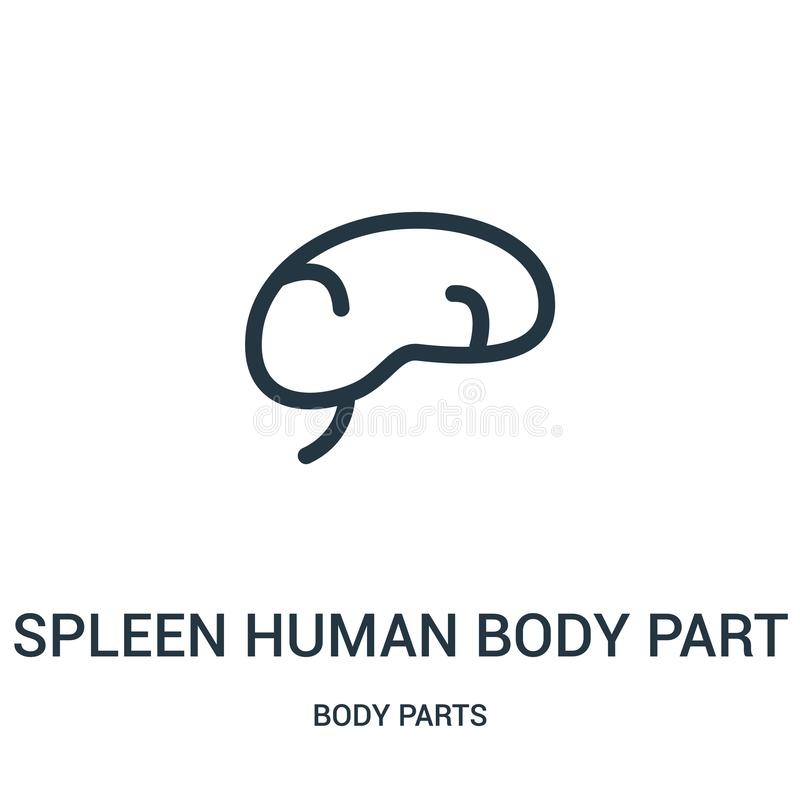 spleen human body part icon vector from body parts collection. Thin line spleen human body part outline icon vector illustration stock illustration