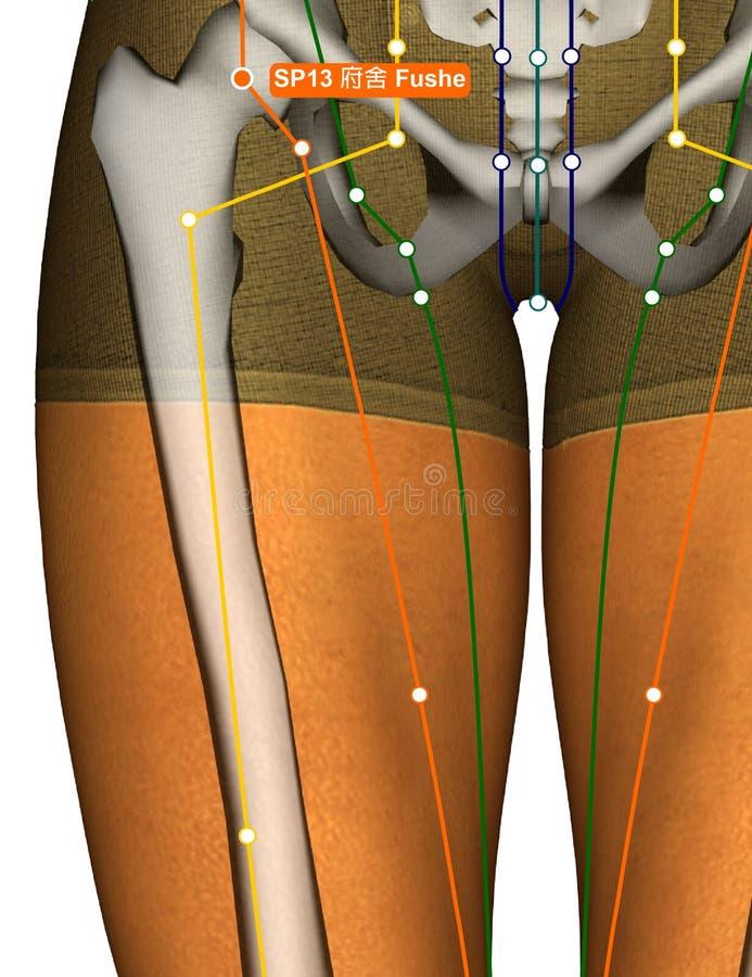 Acupuncture Point SP13 Fushe, 3D Illustration stock image