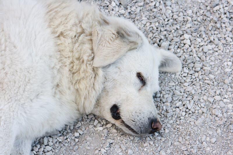 spleeping的狗 免版税库存照片