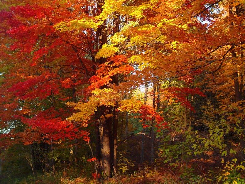 Splendeur d'automne images stock