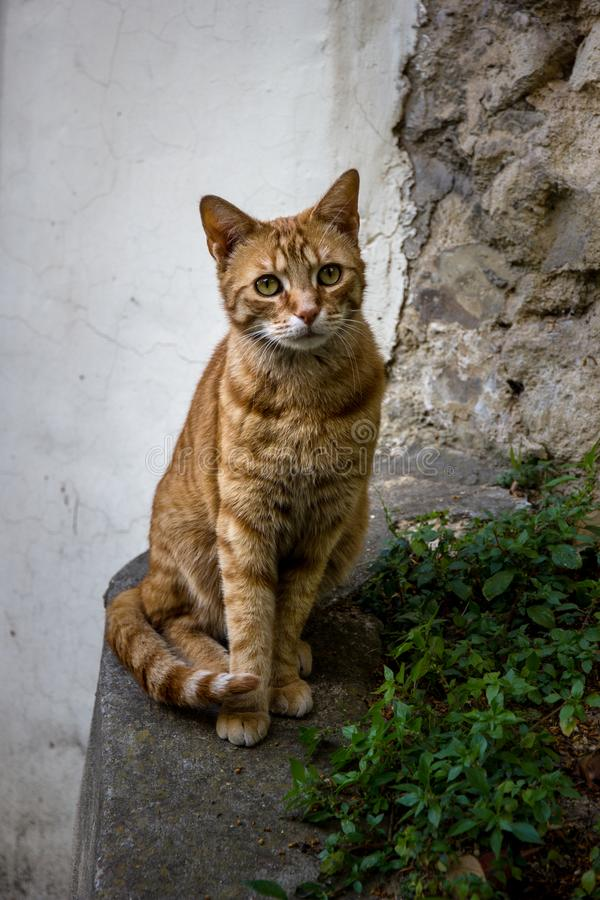 A Splendid cat staring in Paris. A Splendid tabby cat staring at me in Paris nearby St-Cloud Park. animal eyes france ginger look peeling pet red scared stare stock image