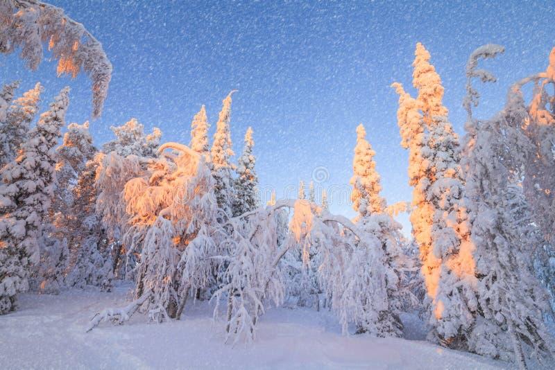 Splendid Christmas scene in the mountain forest. Colorful winter sunrise stock photos