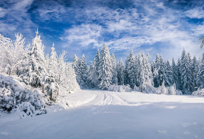 Splendid Christmas scene in the mountain forest at sunny day stock images